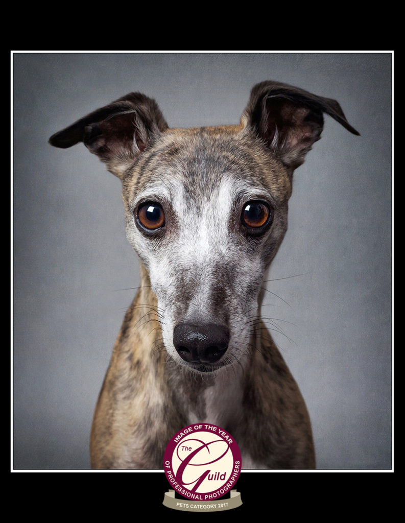 Whippet Pet Photography Image of the Year with the Guild of Photographers
